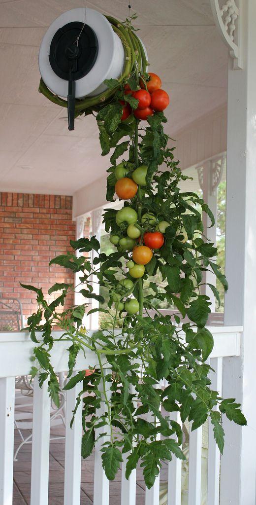 идеи для дачного огорода
