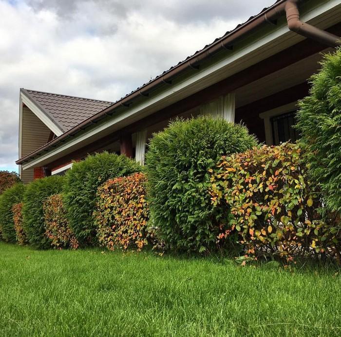 защита от соседей по даче