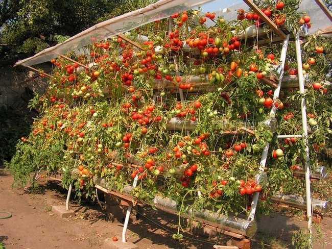 секреты дачного огорода