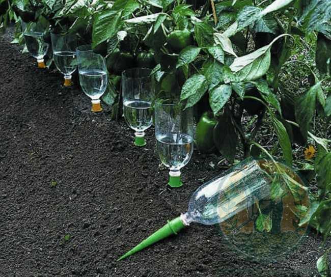 лайфхаки дачного огорода