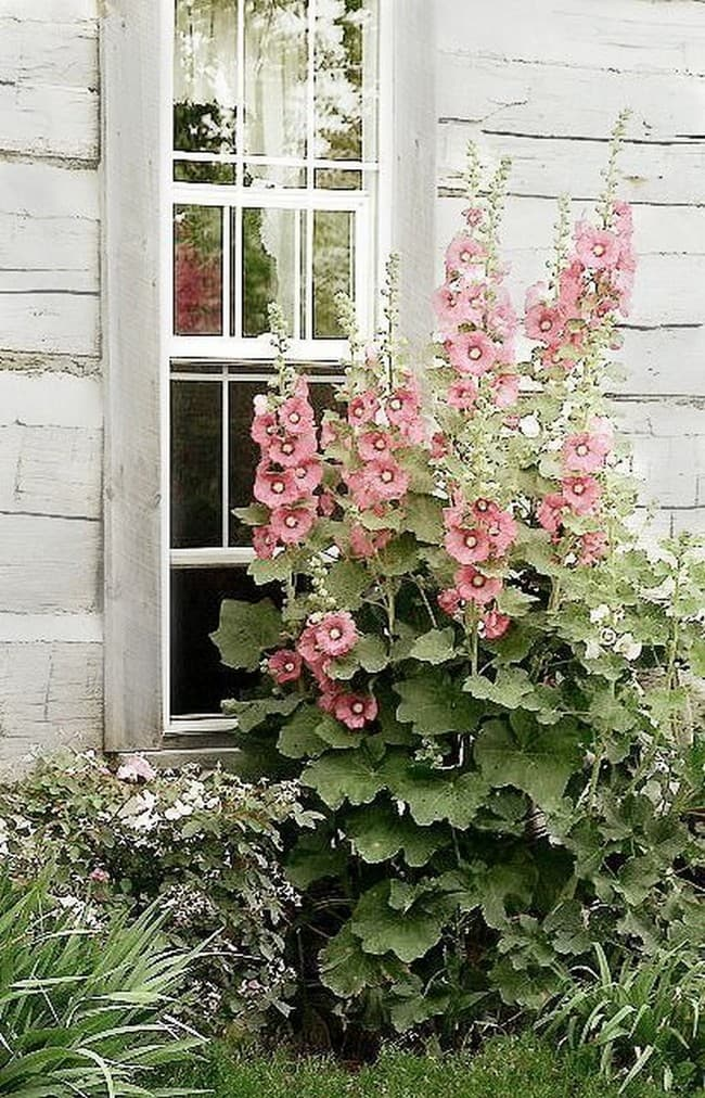 клумба перед окном частного дома