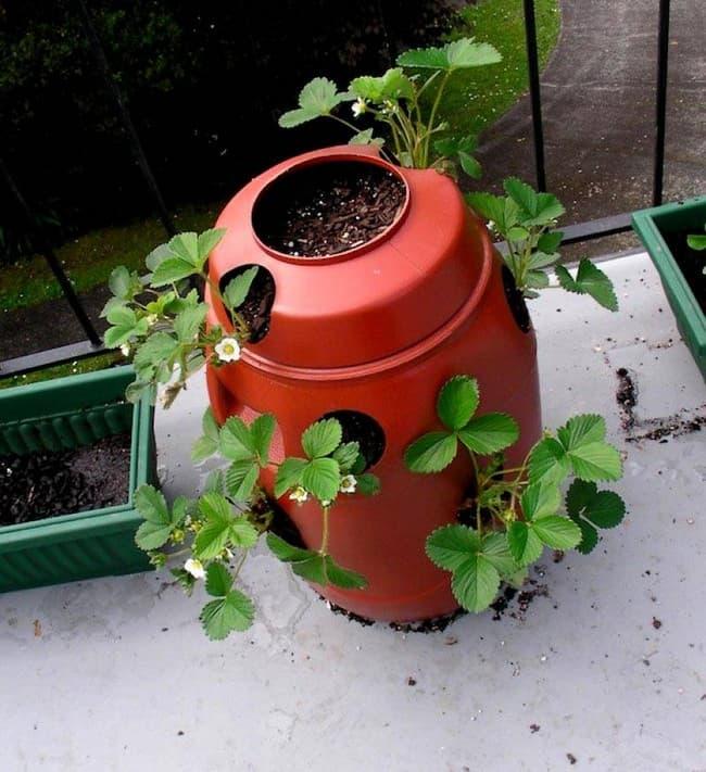 идеи для дачного сада