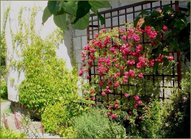 опора для вьющихся растений