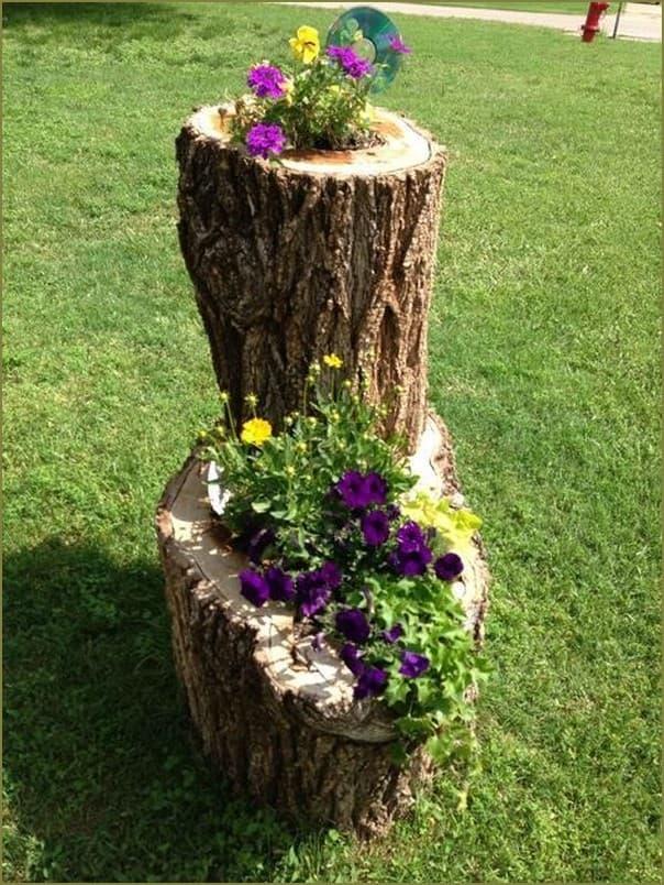 клумба в стволе дерева