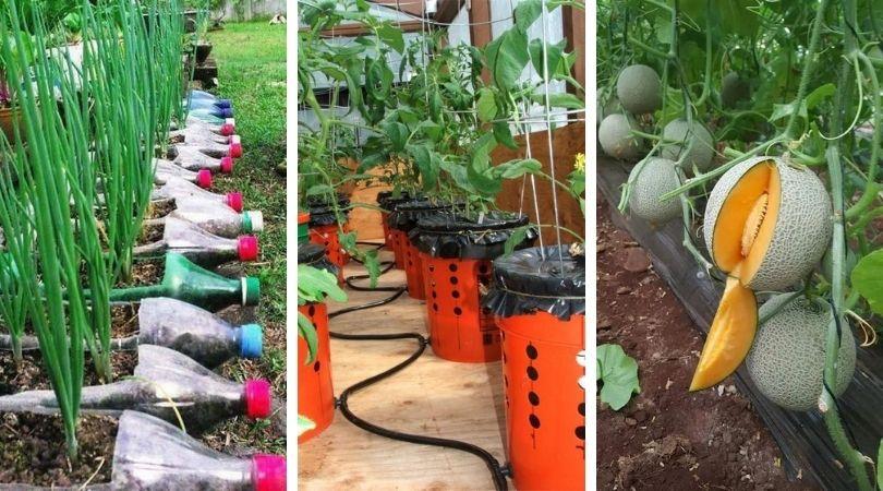 огородные идеи для дачи