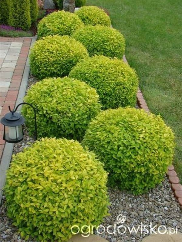 клумба в маленьком дворе