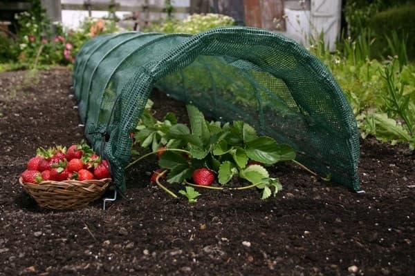 защита огорода от солнца