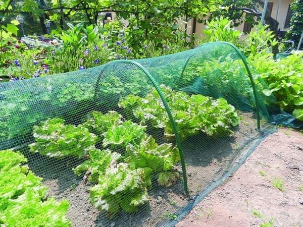 сетка от солнца на огороде
