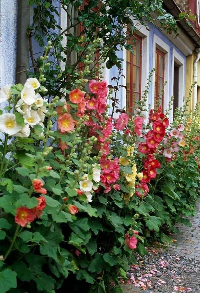 цветник вдоль дома