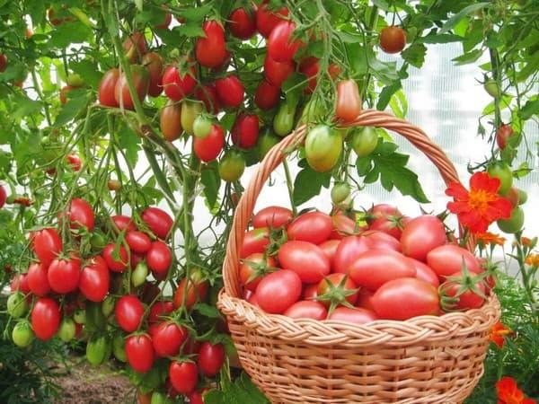 урожай дачного огорода