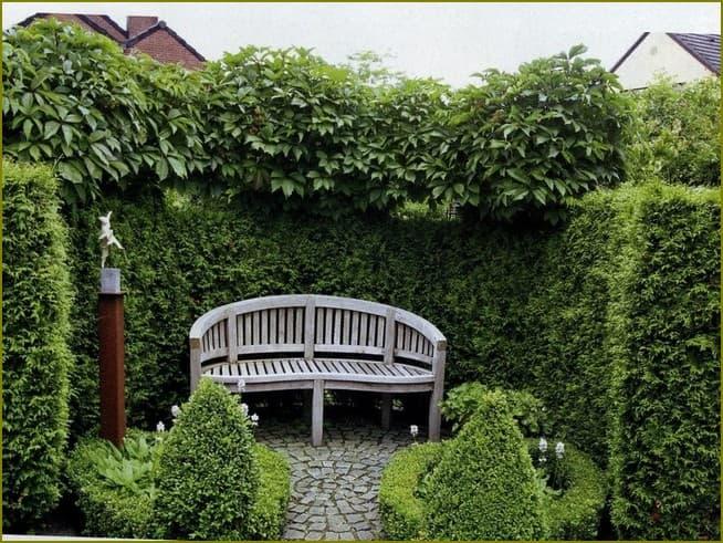 живая изгородь на даче